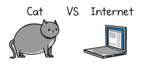 hunsonisgroovy:  Cat vs Internet