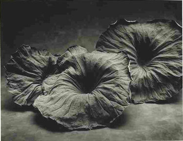 Sheila Rock 3 Lotus Leaves 								Silver Gelatin print