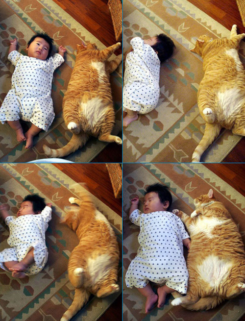1201. Fat Cats and Babies. HAHA.