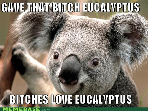 Bitches love eucalyptus