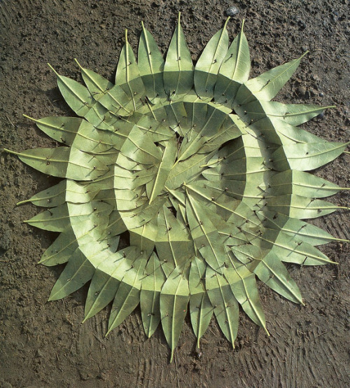 "Andy Goldsworthy ""Fall Leaves."" (Collected on Flickr by Old Chum)"