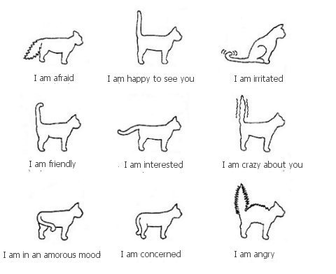 marukido:  cat body language