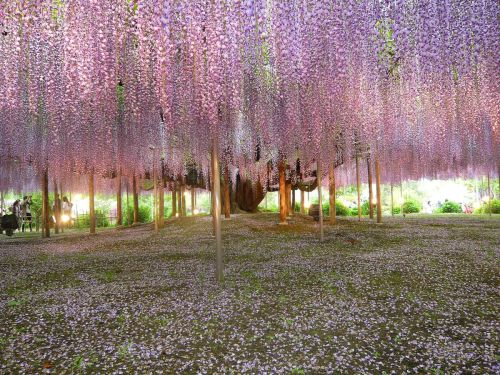 Wisteria by Brian Young