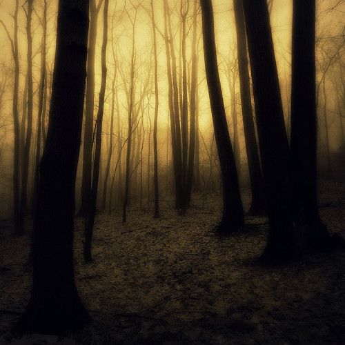 awakeinthedream:  Fog on the mountain (by Truman Terrell)