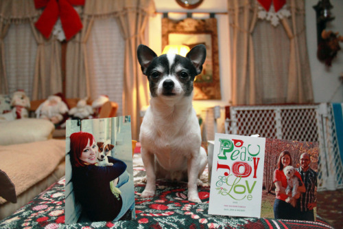 Rufio & I received our first two Christmas cards from Amy Jo & Sprocket, and Jessica(with her hubbers) & Wicket! Of course Amy's picture came with a card and sprockets paw print. Both are super cute and now have a proper place on my refrigerator. My dad doesn't believe I know these people and that they came with a Halmark frame. You guys will be on my refrigerator forever. Seriously. One of my finger paintings is still on there.