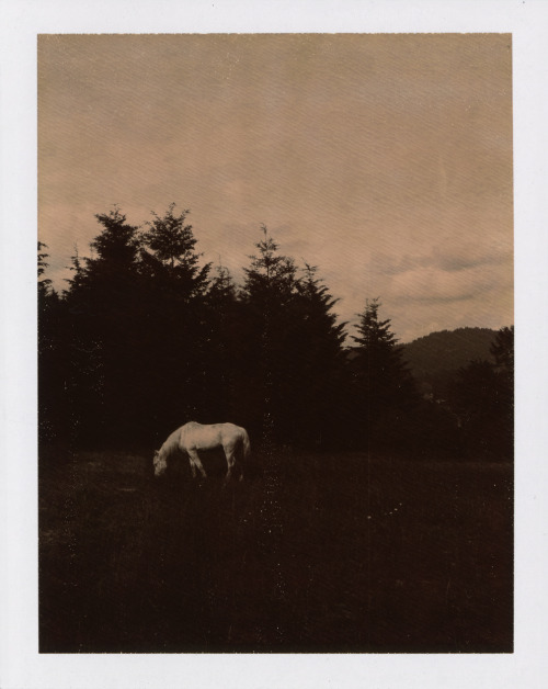 THE DECEMBERISTS - THE KING IS DEAD   DELUXE BOX EDITION POLAROID one of the 2,500 polaroids in the series http://www.decemberists.com/