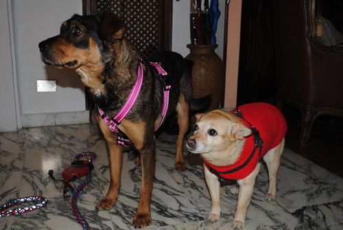 Lisa and Briciola waiting for their walk. Photo Max