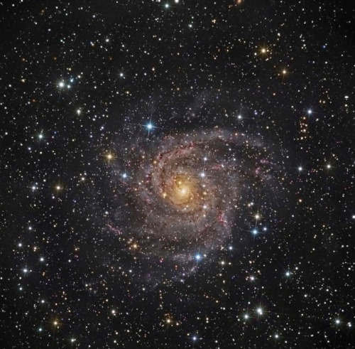 Hidden Galaxy IC 342  Similar in size to other large, bright spiral galaxies, IC 342 is a mere 7 million light-years distant in the long-necked, northern constellation Camelopardalis. A sprawling island universe, IC 342 would otherwise be a prominent galaxy in our night sky, but it is almost hidden from view behind the veil of stars, gas and dust clouds in the plane of our Milky Way galaxy. Even though IC 342's light is dimmed by intervening cosmic clouds, this remarkably sharp telescopic image traces the galaxy's own obscuring dust, blue star clusters, and glowing pink star forming regions along spiral arms that Wind far from the galaxy's core. IC 342 may have undergone a recent burst of star formation activity and is close enough to have gravitationally influenced the evolution of the local group of galaxies and the Milky Way.  Image Credit & Copyright: Ed Henry (Hay Creek Observatory)