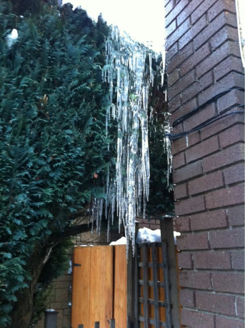 Awesome Icicles!