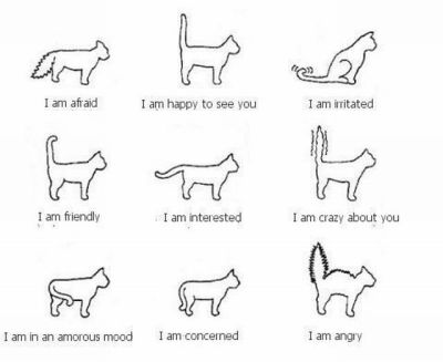 caturday:  Cat guide