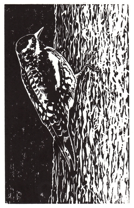 Linocut - Yellow-bellied Sapsucker