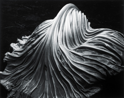melisaki:  Cabbage Leaf photo by Edward Weston, 1931
