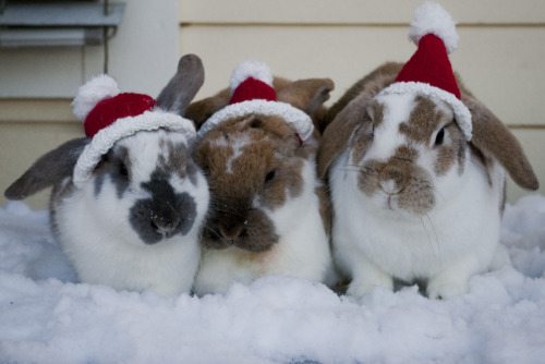 dailybunny:  (Thanks, Ida!)