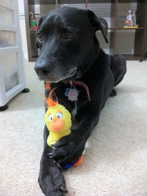 wellthatsjustgreat:  Rewind Ducky!  December 26, 2010 A Christmas present for Ducky after a roller coaster year. I'm so glad We had each other! Ag wellthatsjustgreat:  Ducky: It's a fuzzy duck. Me: Yup. Ducky: Like me. Me: Sorta'. Ducky: It's soft and fluffy. I'm going to destroy it in about three minutes. Me: Yup. Ducky: And that's ok? Me: Does it make you happy? Ducky: Yup. Me: Then it's ok. Ducky: Thanks. Me: I won it for you in Disneyland. Ducky: You were there a long time ago. And you were having fun with friends. You were thinking about me? Me: Of course.You're my best buddy. Ducky: Thanks, Daddy. Me: It was a really bad year, Ducky. Ducky: I know, Daddy. Me: But in the middle of that bad year I had one of the happiest times of my life. Ducky: You were happy when you were there. Me: And during the worst year of my life, you were always there for me. Ducky: You're my Daddy. It's what I do. Me: So I wanted something to connect the two as we head into 2011, you and me. Ducky: Sounds nice. Shows that even in the darkest times, things can bring us happiness if we let them. Me: Thanks, Duck. For everything. Ducky: I can still continue destroying it, can't I? Me: Of course. We are who we are. Ducky: Thanks, Daddy. I love you. Merry Christmas. Me: I love you too, Ducky. Merry Christmas.