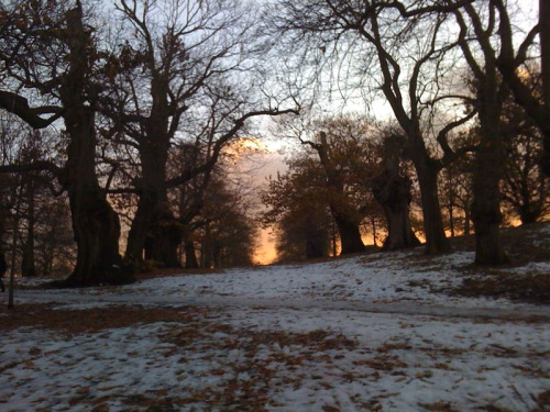First day of Winter.  Greenwich Park.  After taking the photo I instinctively walked forwards, toward the end of the tunnel.  When I got there, the view wasn't half as good it was where I'd started out.  Providence then, until the Spring.  Such potential in standing still.
