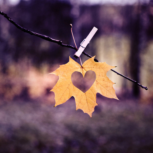 justbesplendid:  love autumn (flickr)   CLEARLY ITS NATURAL