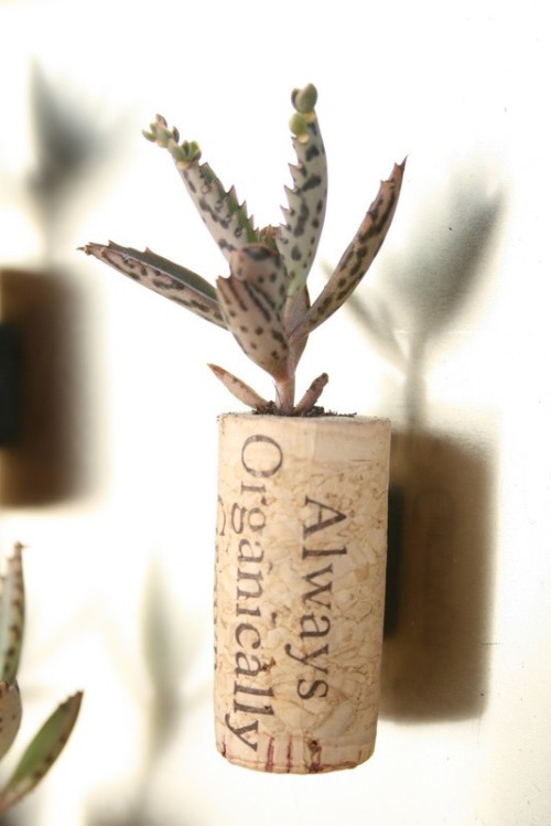 Succulent Cork Magnet You can buy it from AlissaRose on Etsy