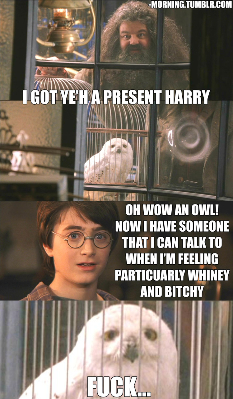 harry potter, the boy who whined  more hilarious posts from the sloth