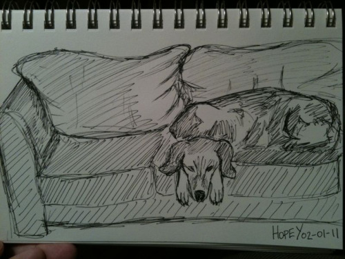 First sketch, still life of hound on a leather couch. It was really hard to break the seal  on this project since I haven't drawn in so long. Tonight a friend mentioned doing a still life every day for a while and that got me thinking that instead of overthinking what to draw first I should just draw what I see every day.