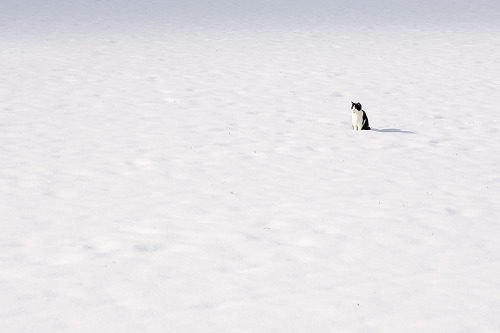 miezekatzen:  alone in the snow 778:
