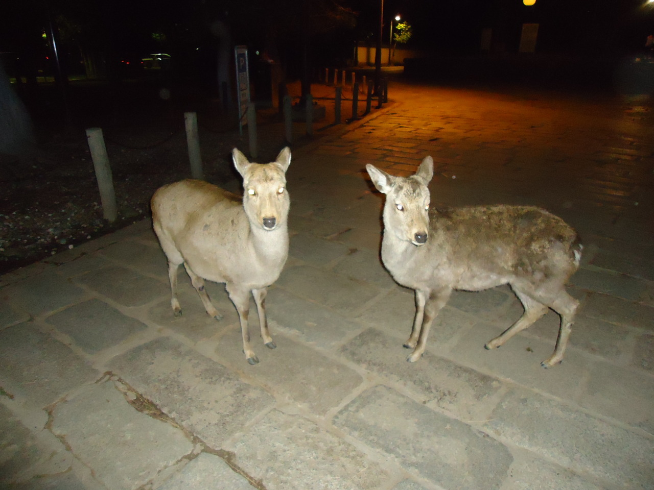 Nara, New Year's Eve.