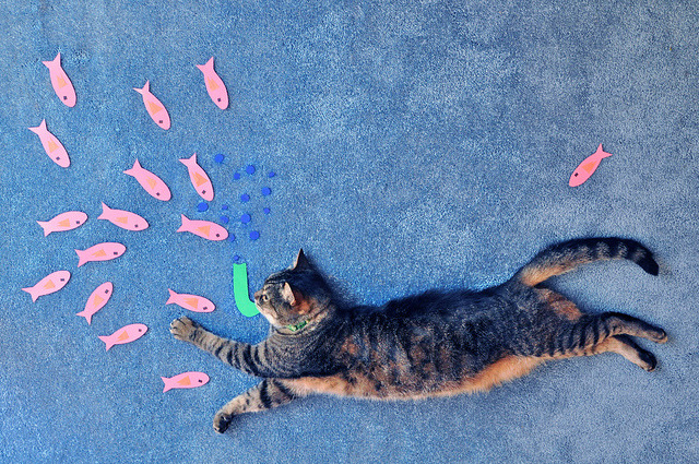 photojojo:  All you need is some paper and scissors to make your kitty's dream come true. by Theresa (Bloch05)