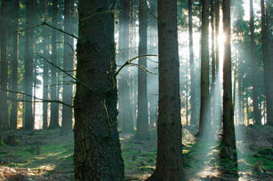 Top five forest stories of 2010 | Grist In the context of an overall bleak 2010 for the planet, forests offer a bright point for some celebration — showing this sector as the area offering perhaps the best hope for continued progress in fighting climate change. Towards that end, here are the world's top five forest stories of the year: Global decline in deforestation, showing that REDD+ is working: By far the most important story of the year was the significant decline in deforestation, particularly in the Amazon. According to a report by the Global Carbon Budget in Nature Geoscience, emissions from land use change have declined about 39 percent, a marked contrast to the approximately one quarter increase [PDF] in fossil fuel emissions, driven largely by developing countries like China. Brazil has led the way — cutting deforestation by a whopping two-thirds in five years — by doing things like better enforcing laws against illegal logging, supporting indigenous peoples' land rights, stopping land conversion to cattle pasture, intensifying existing cattle operations from an average of one head of cattle per hectare to three, and imposing a moratorium on deforestation for soy. They've been aided in this work by a generous $1 billion contribution from Norway for Brazil's Amazon's Fund — showing the possibility of forest conservation finance (also known as Reducing Emissions from Deforestation and Degradation or REDD+) to achieve dramatic positive results.