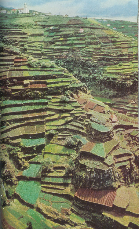 A staircase of fields on a hillside, Madeira, 1959