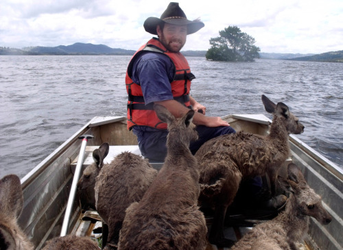 mudwerks:  Australian flooding - The Big Picture - Boston.com  Rodney Dowton ferries a boatload of kangaroos through floodwaters near Wellington, Australia. (AP Photo/Lake Burrendong Sport and Recreation Centre, Tracy Woods)