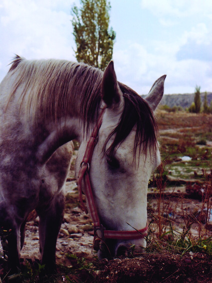 Pony in Cappadocia, taken with my Olympus OM2