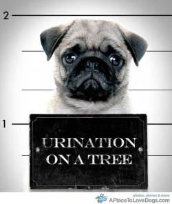 Busted for urination on a tree