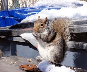 The 10 Dumbest January Holidays  As ridiculous as Squirrel Appreciation Day is, it's still only the tip of the iceberg.