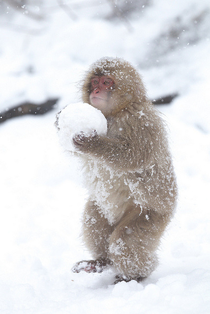 sixohthree:  Carrying the Snow Ball (by Masashi Mochida) Snowball fight!