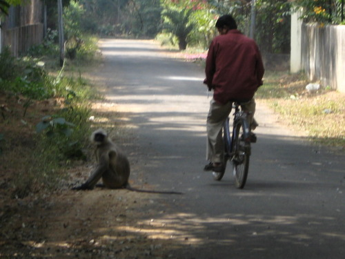 Monkeys at Santeniketan