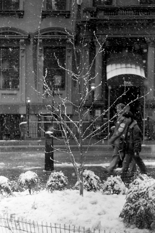 Tree in the snow, NYC Roll 5 of 2011 Shot with Leica M6 and Summicron 50mm f2 lens on Kodak Tri-X 400 film exposed and developed at box speed in Kodak D-76 (stock solution) for 6.75 minutes. nycshawnphotos: