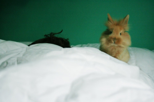 dailybunny:  (Thanks, Michelle!)