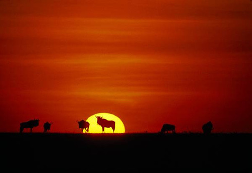 gazing at sunset….what a life…. allthingsafrica:  Tanzania (by thteone)