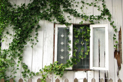 aquaire:  ♥ Ivy growing on walls!