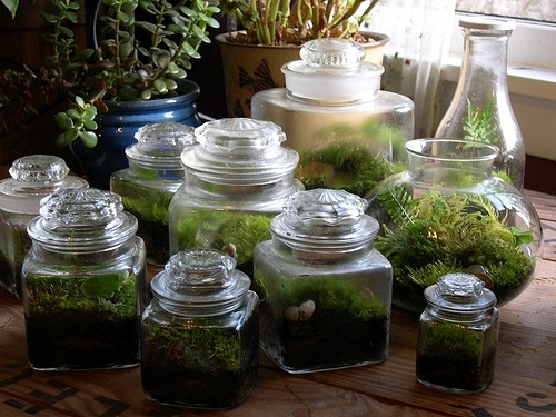 garden-logic:  from herbgardener. More gardens under glass.
