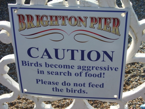 Birds. Big, big birds. BEWARE!