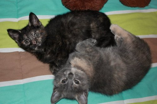 My pretty babies (Black)Pearl and Willow. :D