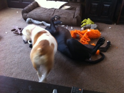 Stella wrestle Toby