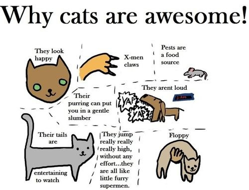 All of this is true, except for the quiet part. You have never heard a hungry kitteh horde.