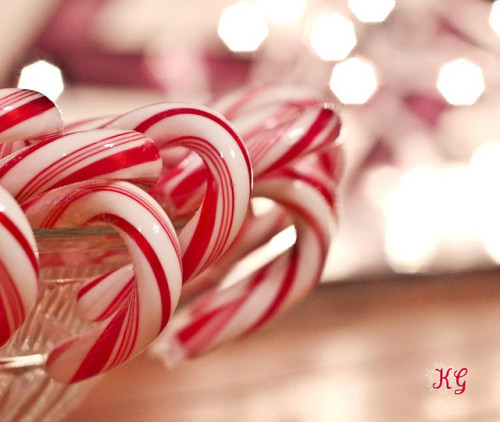 "The Real Beauty Of The Candy Cane…. (Photographer: Katherine Gruender ""Kat"")"