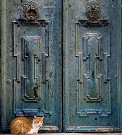 Door Cat - Dubrovnik, Croatia