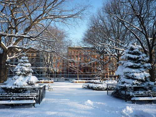 bbook:  nythroughthelens:  Tompkins Square Park. East Village, Manhattan. The snowfall was not nearly as dramatic as the blizzard that New York City experienced a few weeks ago. It's breathtaking though in the areas that haven't melted yet.  Yes, I do indeed have a lovely backyard.  BBook Tumblr and NWK Tumblr are neighbors!
