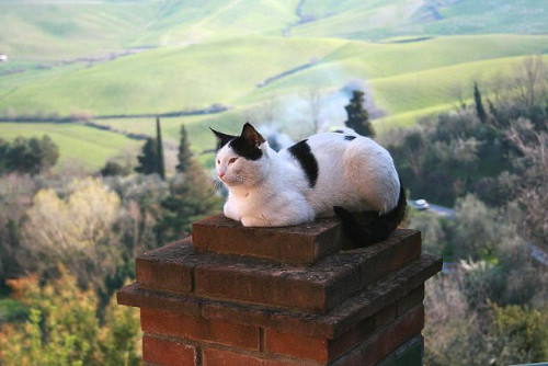 alpenstrasse:  Chimney Cat - Terricciola, Italy