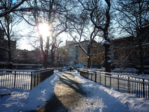 Winter sun.  Tompkins Square Park. East Village, Manhattan.