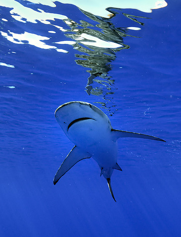 """""""Leave them alone. Respect their beauty."""" - Gordon Ramsay on sharks and the barbaric process of finning"""