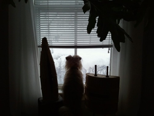 """Maggie woke up to two feet of snow here in Cambridge, MA. So much snow to look at!"""